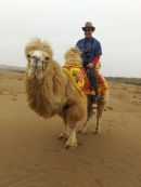 Riding a bactrian camel is easier than the dromedary but not much.