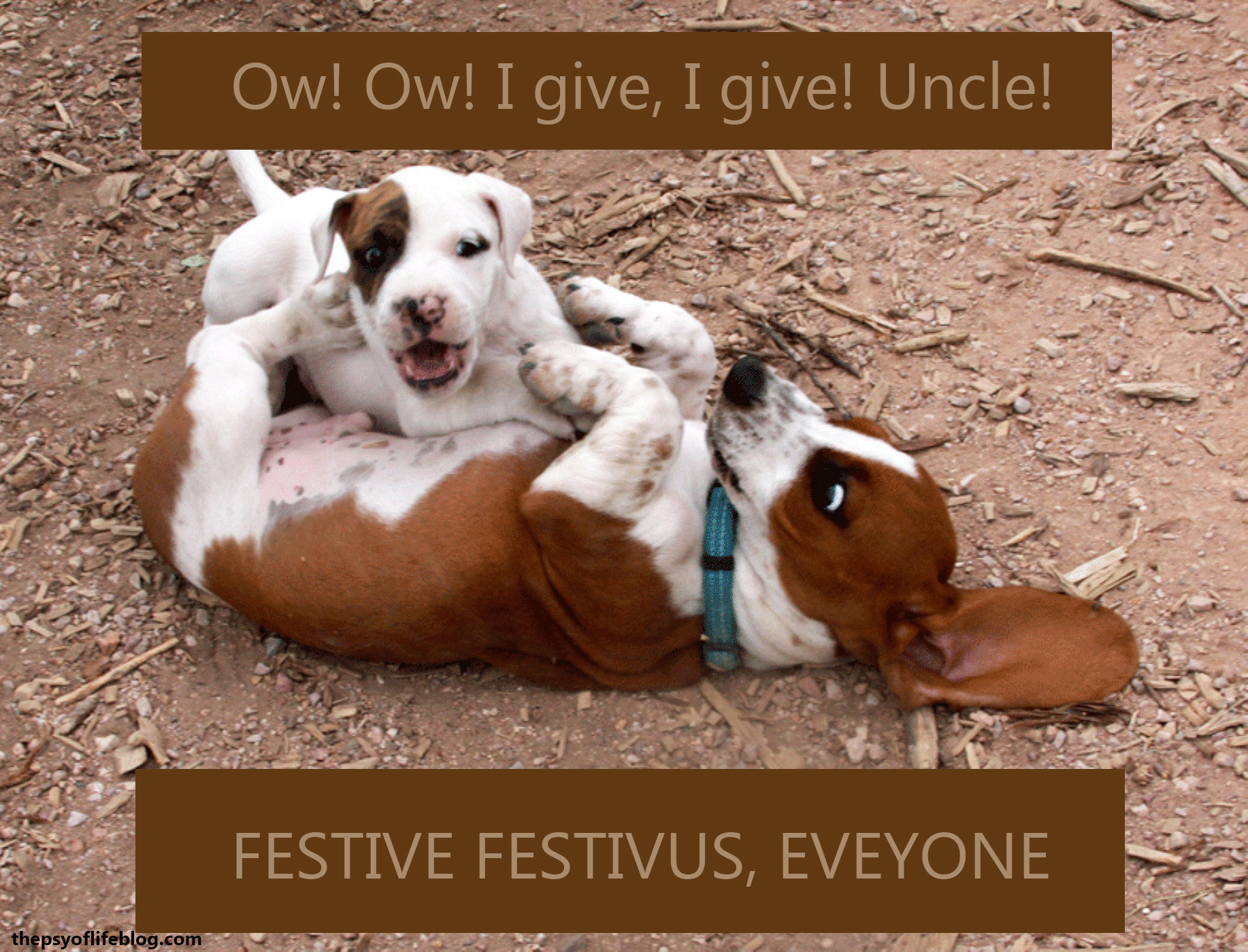 Festivus Card: Puppy Wrestling